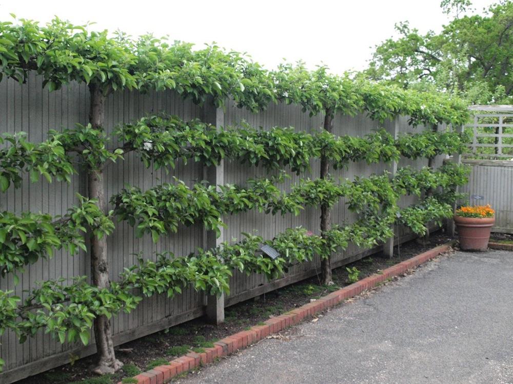 10 Creative Fence Designs   Master Garden