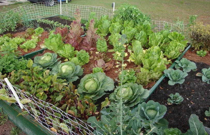 garden_veggie