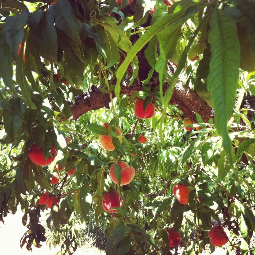 Peach-Tree-Instagram