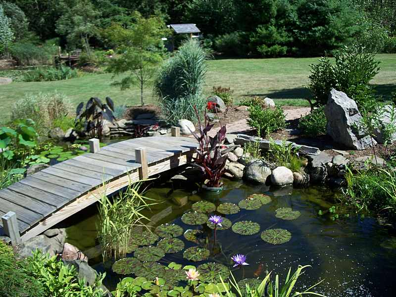 small-garden-ponds-design-1