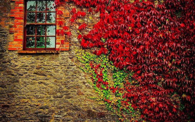 autumn_season_wall_houses_plants_vegetation_windows_suburbia_1280x800_44346