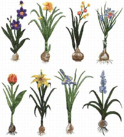 Flower bulb planting guide master garden we have grouped the articles by planting seasons spring planted bulbs include mightylinksfo