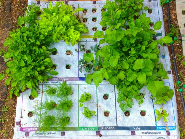 nourishmat-growing-8191d28f7bfec345cc859b02e6c4fe00afcae450-s4-c85