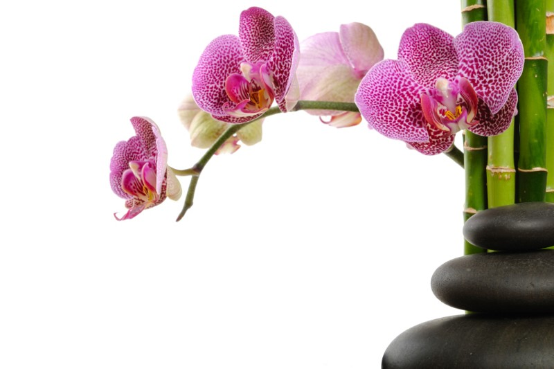 history and meaning of orchids  master garden, Natural flower