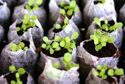 seedstarting1