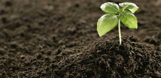 subisdized_fertilizer