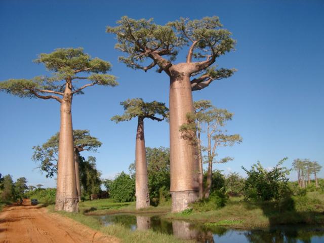 weird-tree05