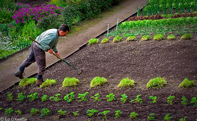 Gardener-5
