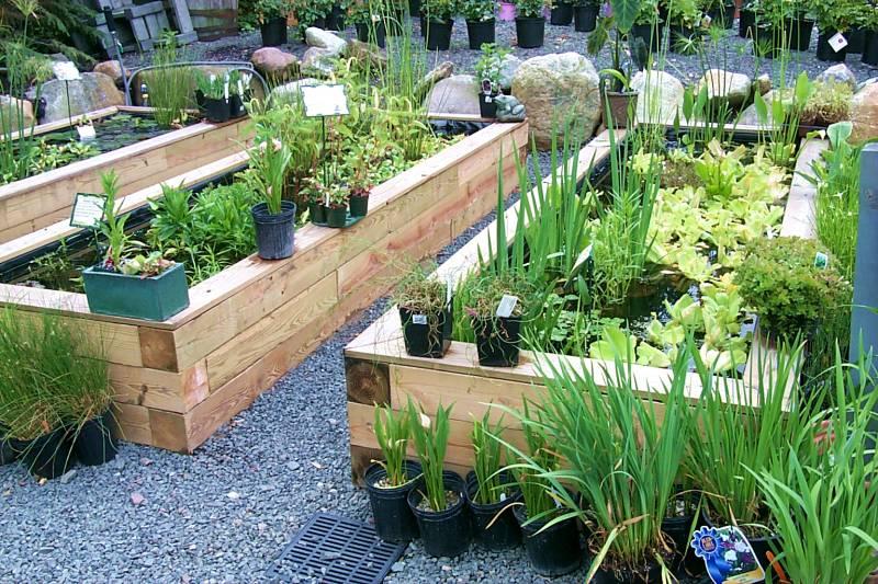 P0002030_water_gardening_tw