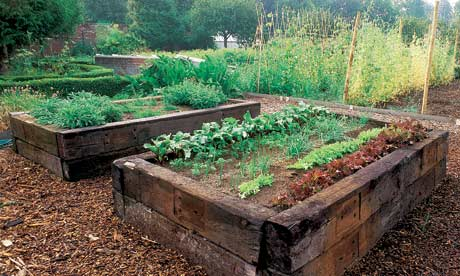 raised-bed-vegetable-garden
